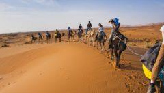 Morocco, Camel ride in Erg Chebbi Sahara Desert, Merzouga, by travel photographer Matthew Williams-Ellis