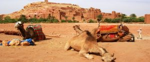 Ait Ben-Haddou Day Tour